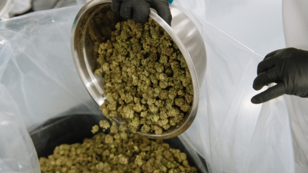 CannTrust submits remediation plan; temporarily laying off 1/4 workforce – Article – BNN – BNNBloomberg.ca