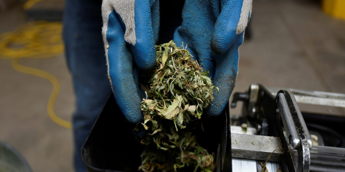 Two hemp and CBD startups just laid off workers as the industry confronts a uniquely challenging phase