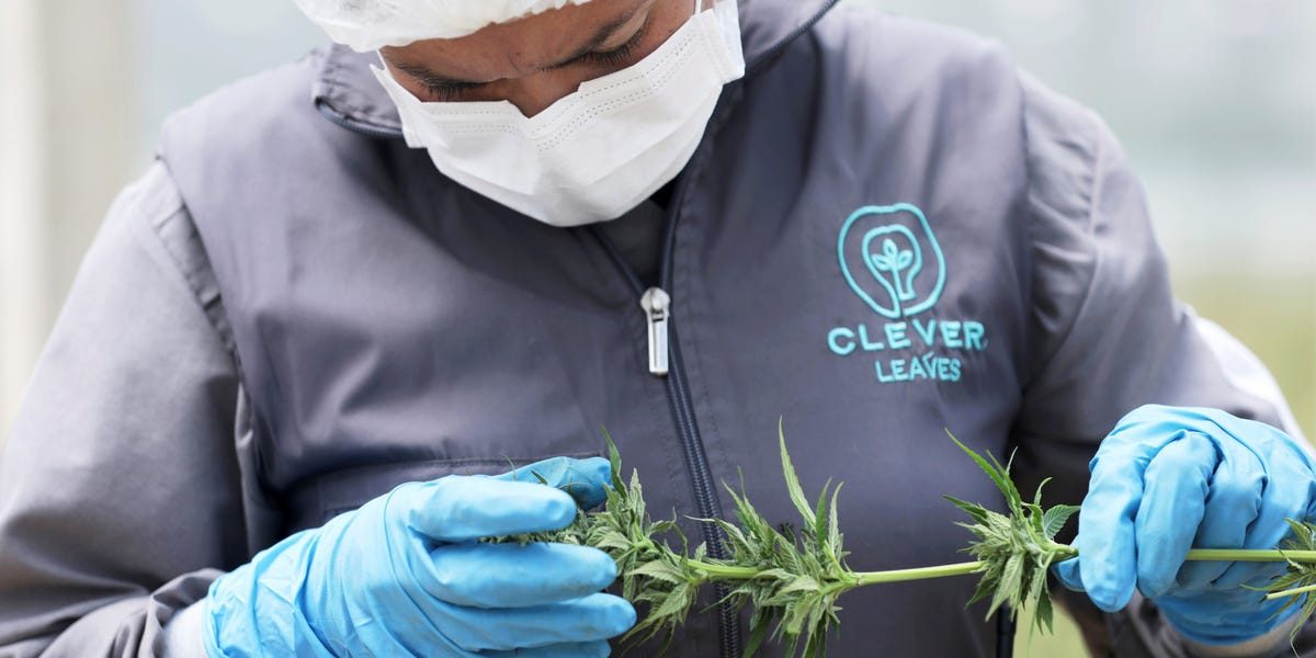 These are the 15 buzziest cannabis startups to bet on in 2020, according to top investors