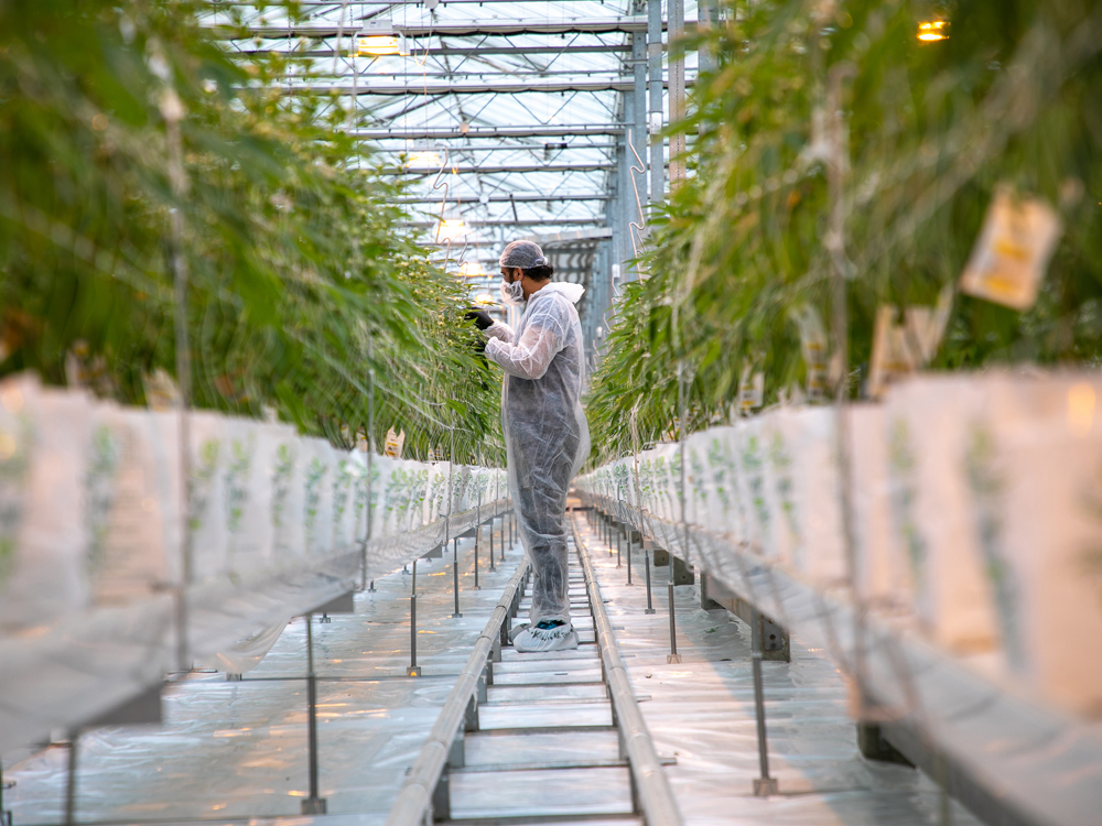Canopy Growth lays off 500 workers, shuts massive B.C. greenhouse facilities – Financial Post